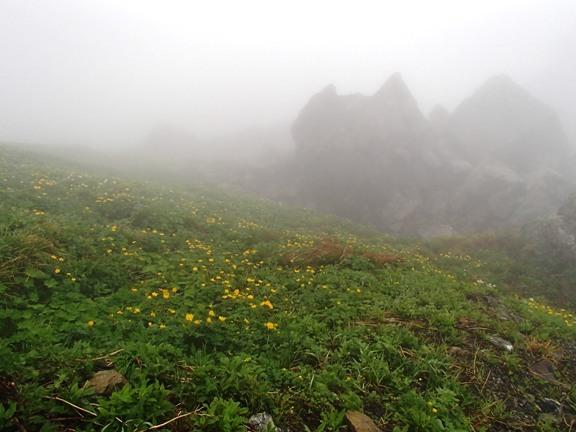 お花畑4.JPG