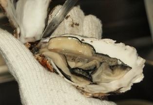 厚岸の牡蠣2.JPG