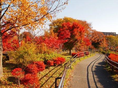 国分寺公園1.JPG