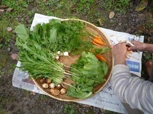 きれいになった野菜達.JPG